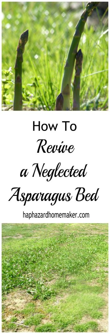 Neglected Asparagus Bed with Weeds - haphazardhomemaker.com
