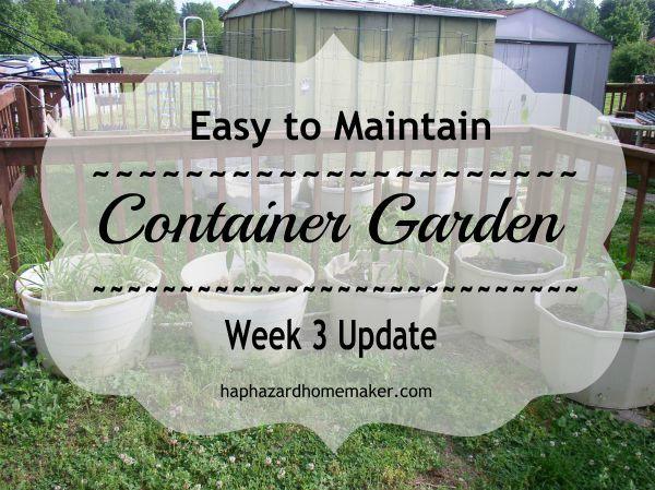 Easy to Maintain Container Garden Week 3 Update - haphazardhomemaker.com