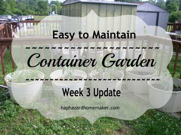 Easy to Maintain Container Garden Week 3 Update - haphazardhomemaker.com