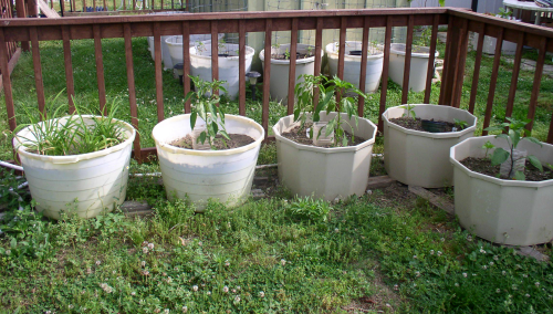 Easy to Maintain Container Garden Update 3 Jalapeno & Pablano Peppers - haphazardhomemakers.com