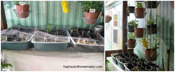 Easy to Maintain Container Garden Week 3 Update Seed Trays & Hanging Herb Pots - haphazardhomemaker.com