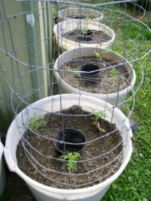 Easy to Maintain Container Garden Week 3 Update Tomatoes - haphazardhomemakers.com