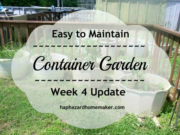 Simple Container Garden Update - haphazardhomemaker.com