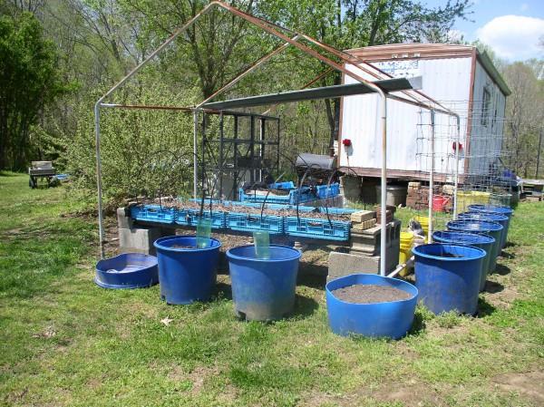 Update Week 2 Container Garden, beans & Peas - haphazardhomemaker.com