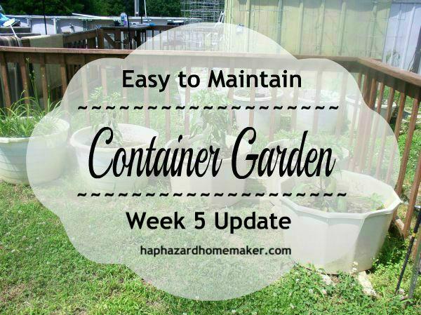 Easy to Maintain Container Garden Week 5 Update - haphazardhomemaker.com