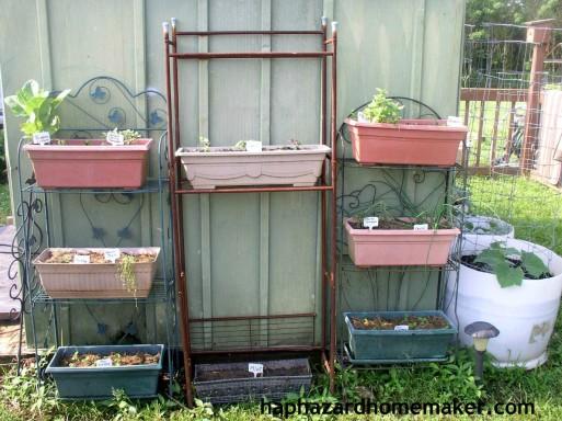 Easy to Maintain Container Garden Week 5 Update Herb Shelves - haphazardhomemaker.com.jpg