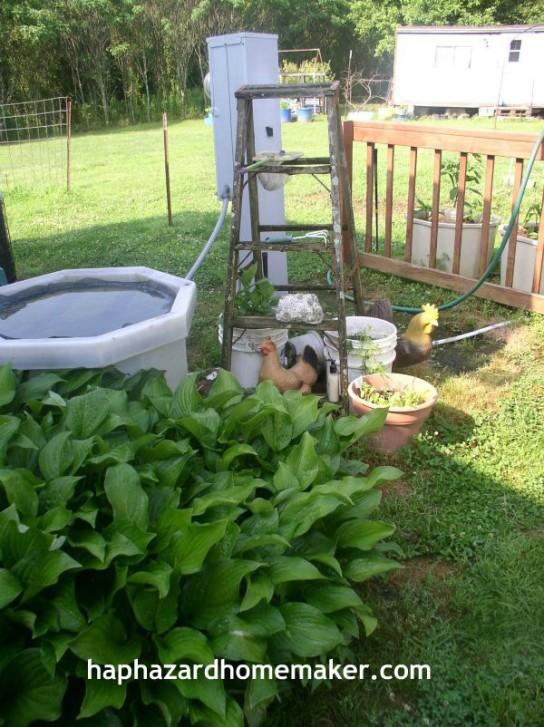 Easy to Maintain Container Garden Week 5 Update Ladder - haphazardhomemaker.com