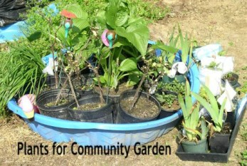 Update 2 Plants for Community Garden - haphazardhomemaker.com
