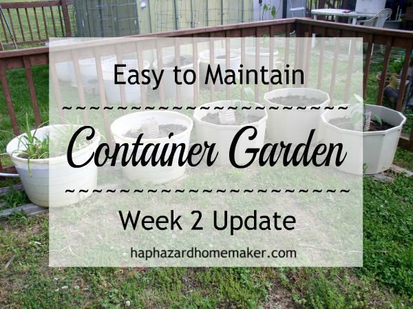 Update Week 2, Container Garden - haphazardhomemaker.com