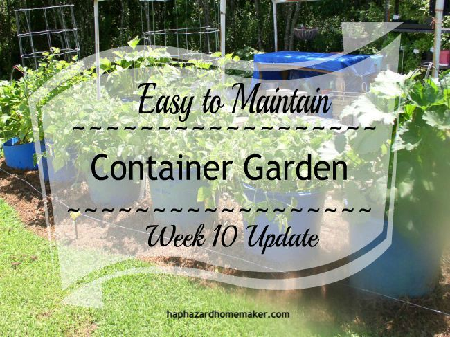 Easy to Maintain Container Garden Week 10