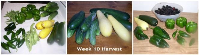 Harvest Week 10