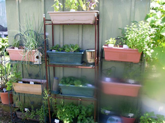Herb Shelves