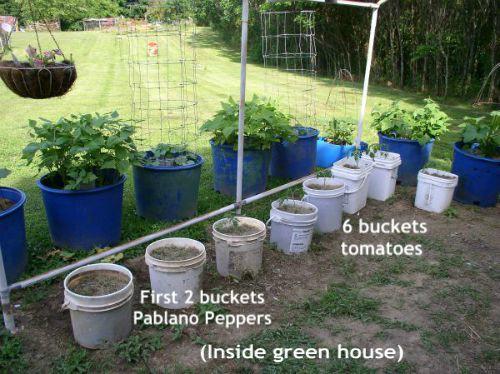 Easy to Maintain Container Garden Buckets Week 6 Update - haphazardhomemaker.com