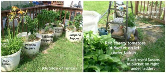 Easy to Maintain Container Garden Week 6 Update Hot Peppers - haphazardhomemaker.com