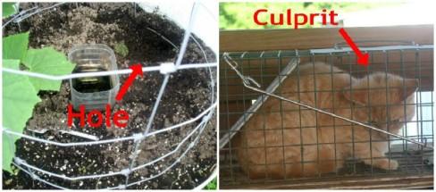 Easy to Maintain Container Gardener Week 6 Update Cat -haphazardhomemaker.com