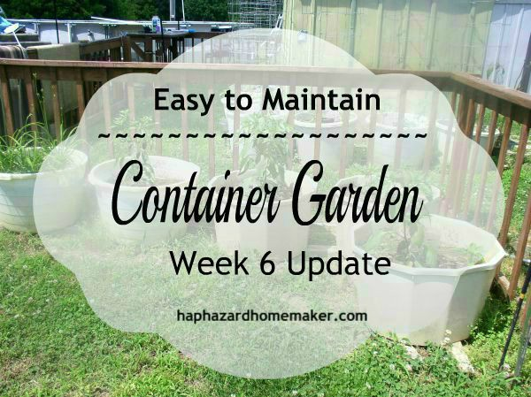 Easy Container Garden Week 6 Update - haphazardhomemaker.com