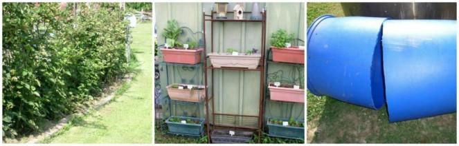 Easy to Maintain Container Garden Week 6 Update Herbs - haphazardhomemaker.com