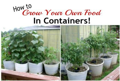 Grow Your Own Food In Containers
