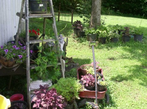 Week 8 Update Ladder #2 Ornamental Plants