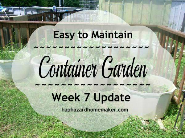 Container Garden Week 7 Update - haphazardhomemaker.com