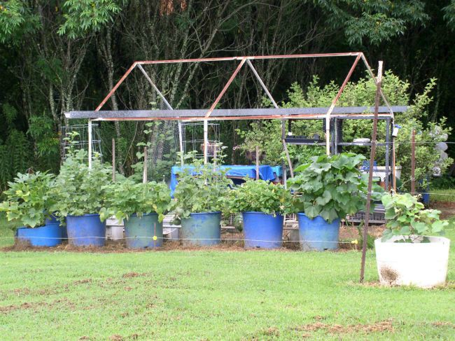 Week 11 Greenhouse Area Container Garden