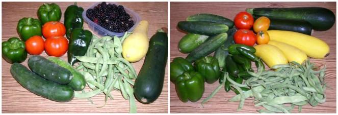 Week 11 Harvest