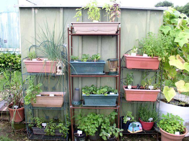 Week 11 Herb Garden