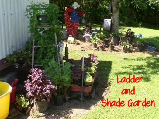 Ladder & Shade Garden