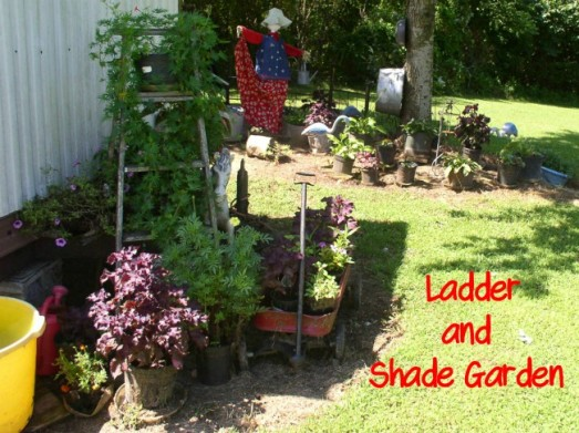 Ladder & Shade Garden