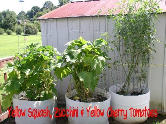 Squash & Yellow Cherry Tomatoes