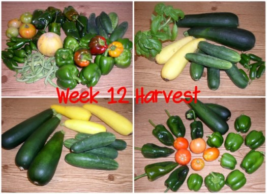 Week 12 Harvest Collage