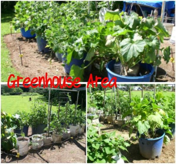 Week 12 Greenhouse Area