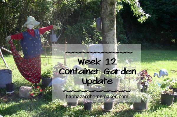 Container Garden week 12 Update