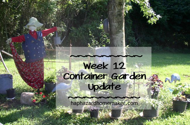 Container Garden week 12 Update