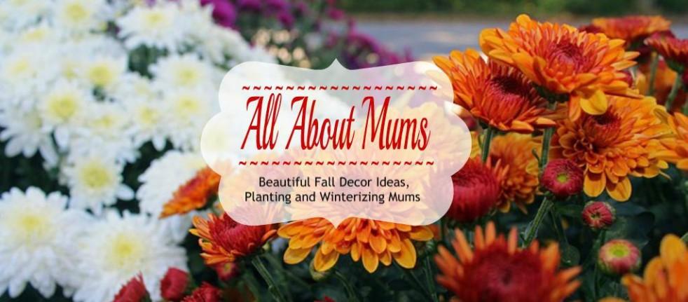 Fall Decor Ideas, Plantinng and winterizing Mums, Propagating Mums