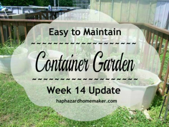Container Garden Week 14 Cover