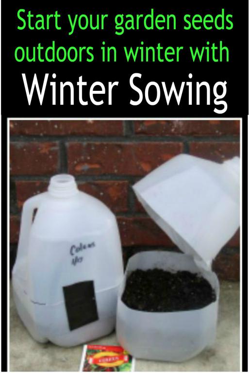 Start your garden seeds in milk jugs outdoors in wintertime - haphazardhomemaker.com