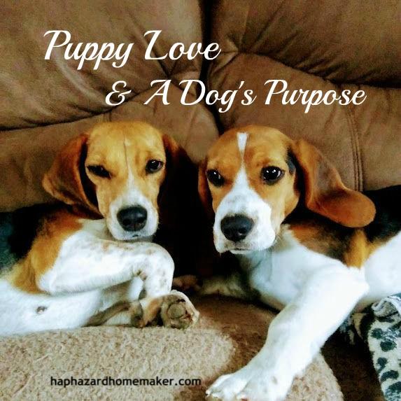 Puppy Love & A Dog's Purpose - haphazardhomemaker.com